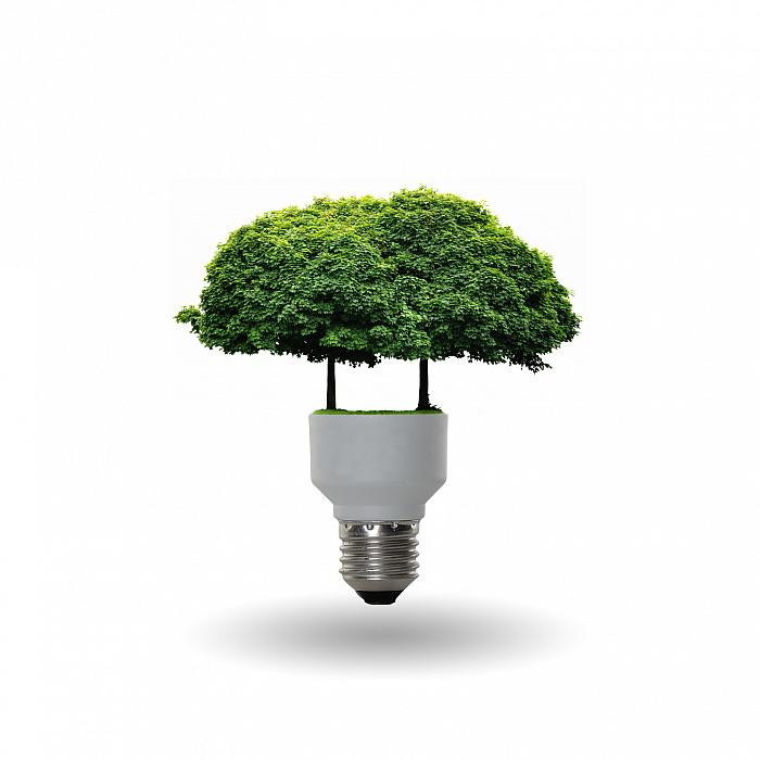 kozzi-bulb with a tree-1449x1449